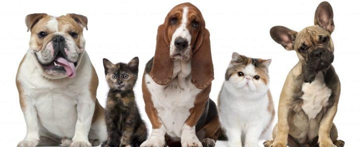 Seus Pets são bem-vindos!